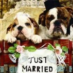 pet_weddings_06